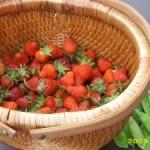 Gardens & Farmer's Markets and a Recipe