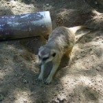San Diego Wild Animal Park & Giveaway
