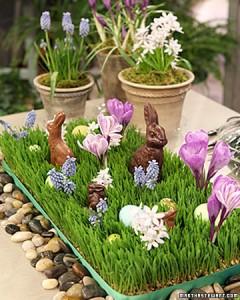bunnies 7