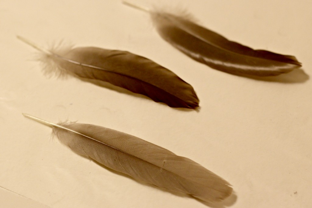 glitter tipped feathers 2