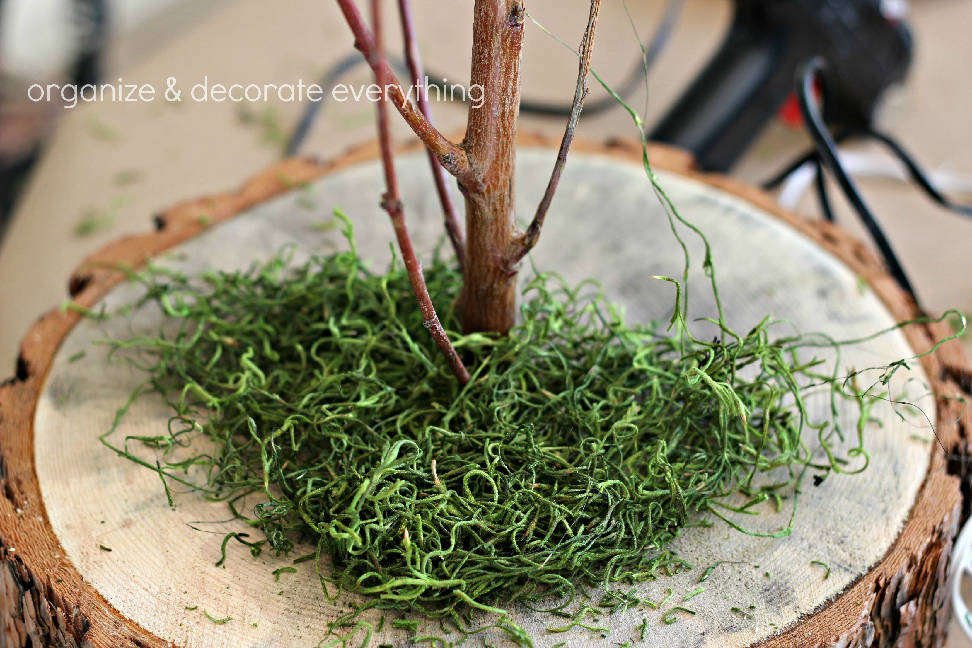 Tree trunk slice branch centerpiece organize and for Tree trunk slice ideas