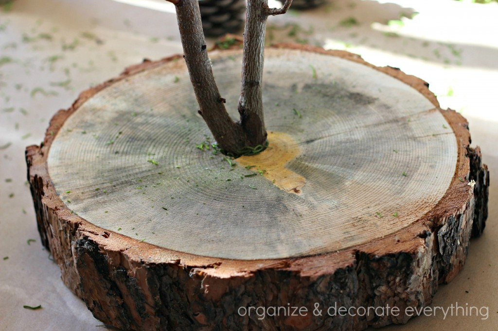 Trunk Slice and Branch Natural Centerpiece 3.1