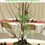 Tree Trunk Slice & Branch Centerpiece