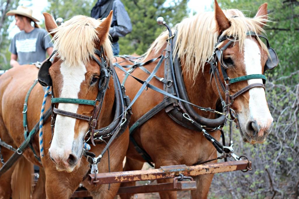 Zion Ponderosa Ranch 5