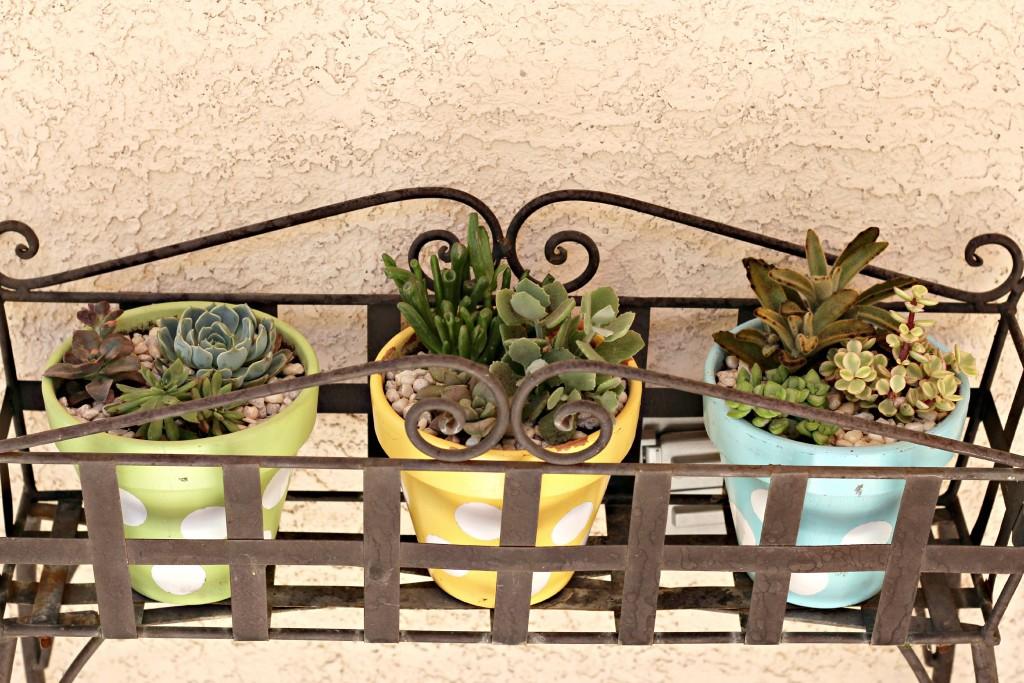 succulents.11