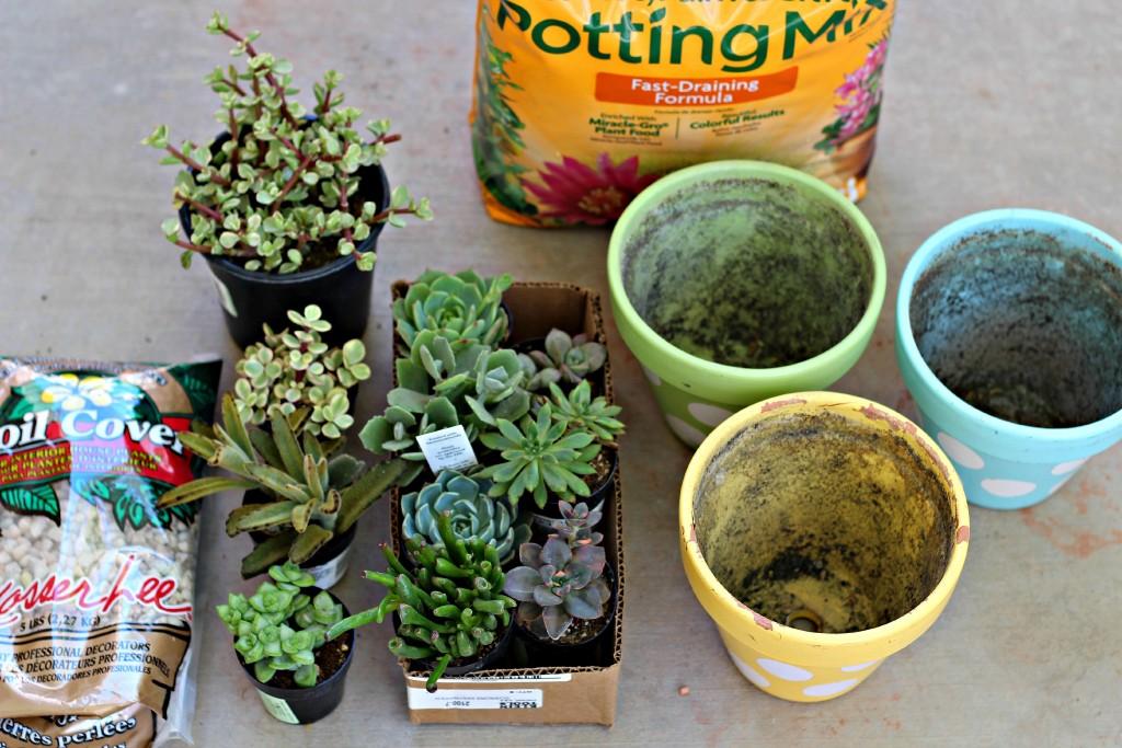 succulents.2