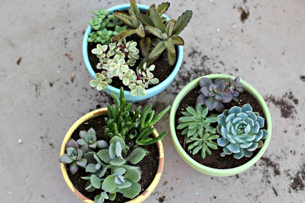 succulents.6