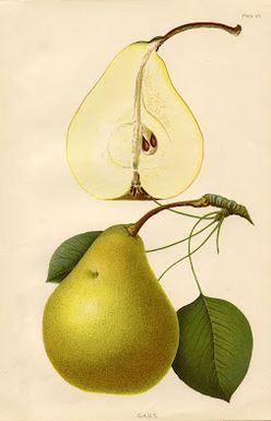 Fruit Decor Pear Print