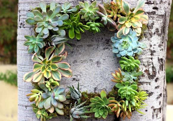 Wreath Succulent