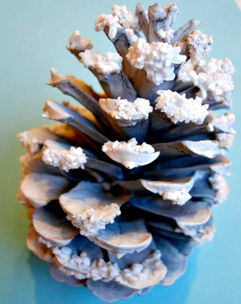pinecone snowy
