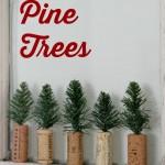 Cork Pine Trees