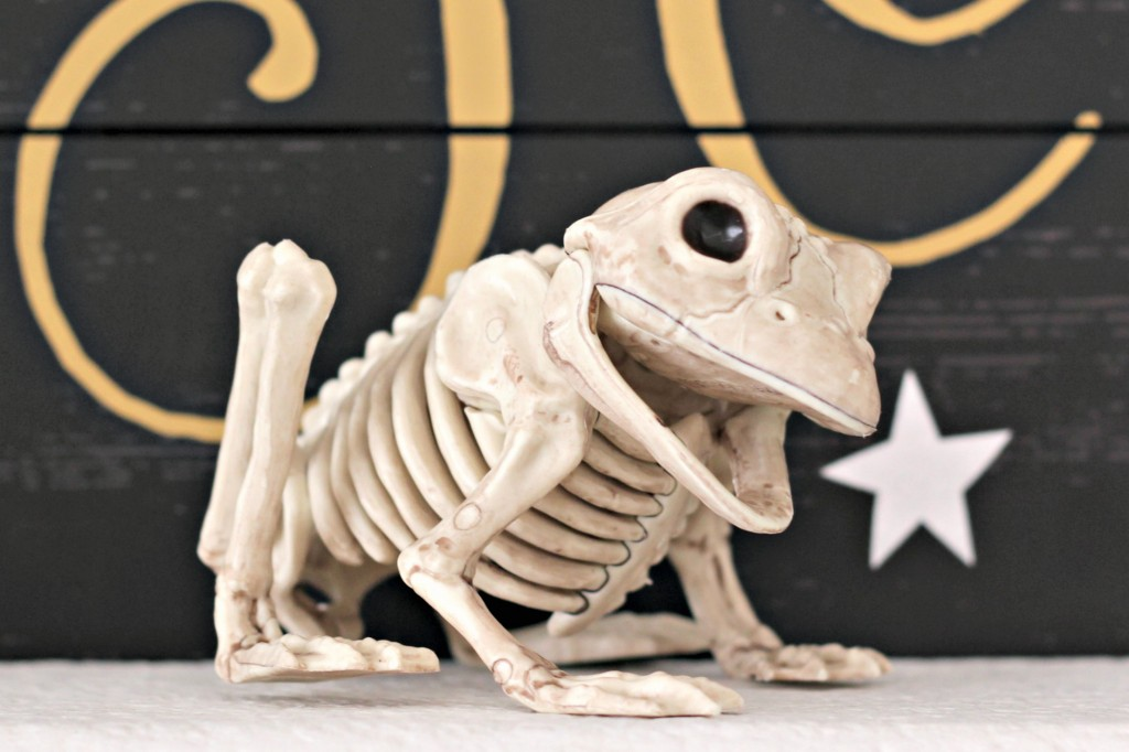 trick-or-treat-skeleton-frog