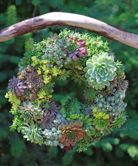 Spring Wreath Succulent