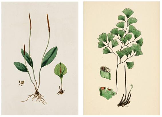 Plant printables