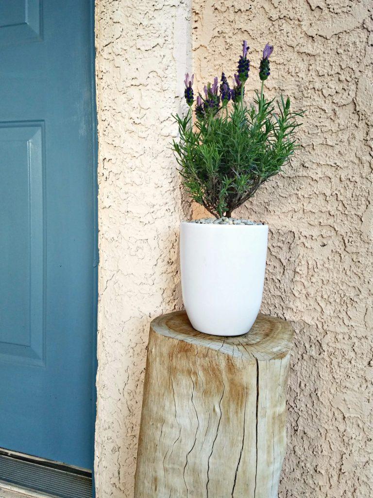 Spring Porch decor lavender pot