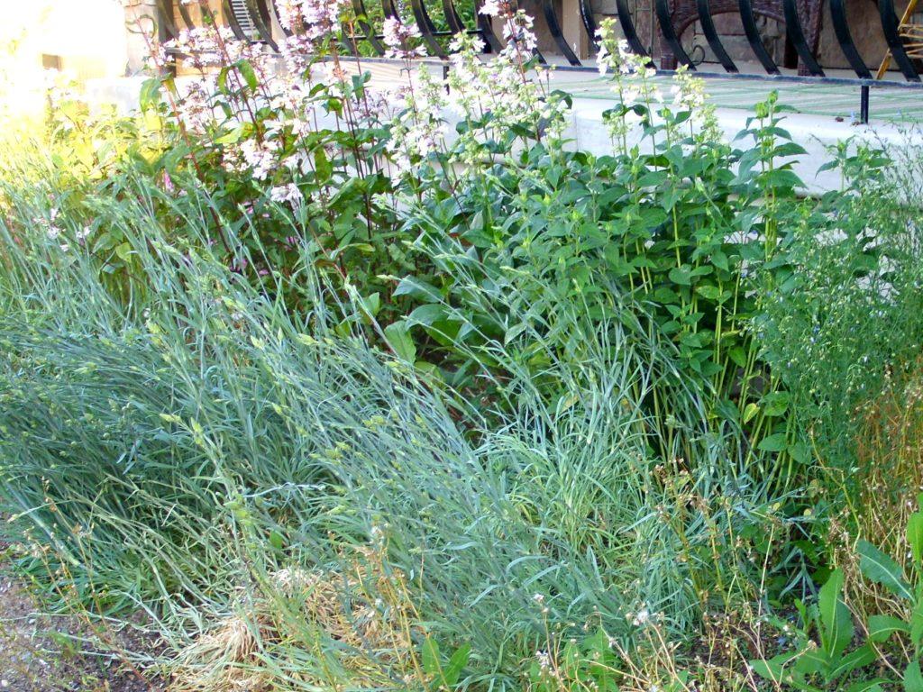 June decluttering Garden